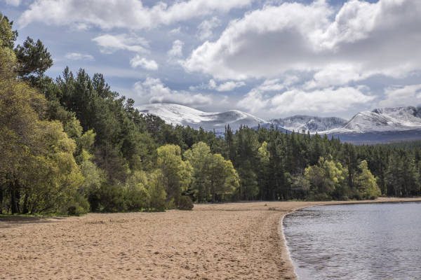 Beach and woodland with snow on the hills behind